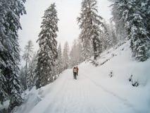 Trekkers on a winter trail in the snow, Malga Ra Stua, Cortina D royalty free stock photo