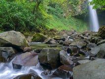 Trekkin-Ausflug im Dschungel Lizenzfreie Stockfotos