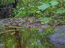 Trekkin tour in Monteverde Stock Images