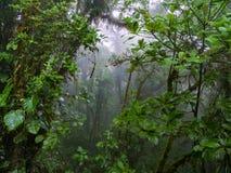 Trekkin turnerar i Monteverde Arkivbilder