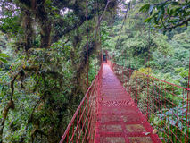 Trekkin turnerar i Monteverde arkivfoto