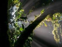 Trekkin turnerar i Monteverde royaltyfria foton