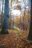 Trekking ścieżka w lesie Fotografia Stock