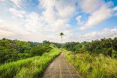 Trekking на Campuhan Ридже Стоковая Фотография