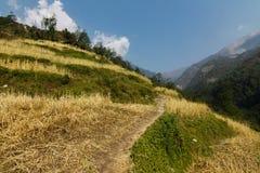 Trekking на hillPoonв Непале Стоковое Изображение