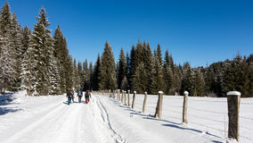 Trekking através da neve Foto de Stock Royalty Free