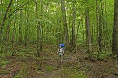 Trekking através de uma floresta verdejante imagens de stock