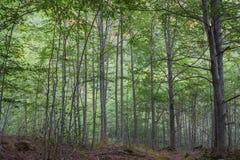 Trekking auf schöner Waldlandschaft im italienischen Nationalpark, Abruzzo Teramo stockfotos