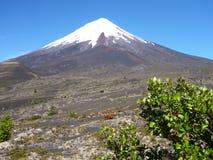 Trekking autour d'osorno de volcan couvert par neige Photo libre de droits
