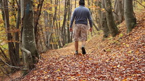 Trekking Through Autumn Forest. A man with cargo short pants, boots and sweater, walks on a path of hardwood, covered with thick fallen leaves, in a gentle stock video footage