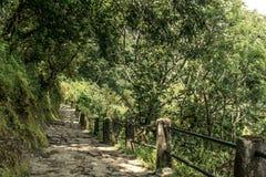 Trekking bana för skog, Annapurna strömkrets, Nepal Arkivbilder