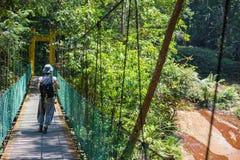 Trekking in Borneo rainforest Stock Images