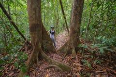 Trekking in Borneo rainforest Royalty Free Stock Photos