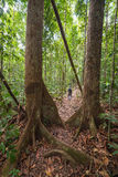 Trekking in Borneo rainforest Royalty Free Stock Photography