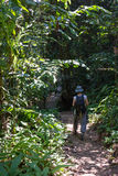 Trekking in Borneo rainforest Royalty Free Stock Photo