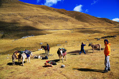 Trekking in Cordiliera Huayhuash Stock Image