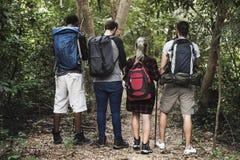Trekking d'amis dans la forêt ensemble Photos stock