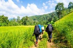 Trekking dans le forrest Photos libres de droits