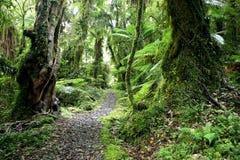 Trekking dans le paradis vert Images libres de droits