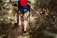 Trekking de couples ensemble dans la jungle Image libre de droits
