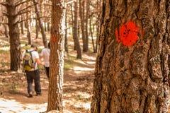Trekking de deux types dans la forêt de Cercedilla, Espagne Image stock