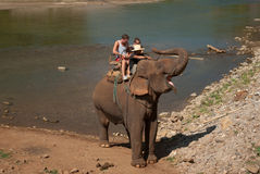 Trekking dell'elefante Immagine Stock