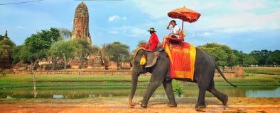 Trekking dell'elefante Immagini Stock Libere da Diritti