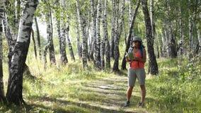 Trekking della giovane donna in un legno di betulla stock footage