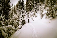 Trekking della ragazza con le racchette da neve nel legno Fotografia Stock