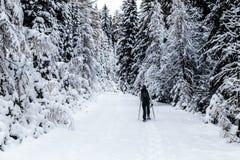 Trekking della ragazza con le racchette da neve nel legno Fotografia Stock Libera da Diritti