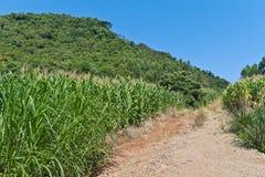 Trekking an der Landstraße in Nova Petropolis - Rio Grande tun Sul Stockbild