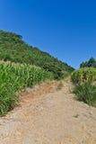 Trekking an der Landstraße in Nova Petropolis - Rio Grande tun Sul Stockfotografie