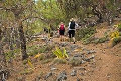 Trekking door het bos van de pijnboomboom langs kustlijn op e4-sleep tussen Loutro en Agia Roumeli bij zuidwestenod Kreta eiland stock fotografie