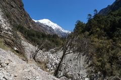 Trekking du Népal en vallée de Langtang Images libres de droits