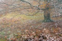 Trekking en montagnes de Mehedinti en automne Images libres de droits