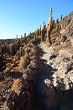 Trekking entre les cactus gigantesques chez Isla Incahuasi Salar de Uyuni Département de Potosà bolivia Images stock