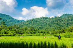 Trekking in the forrest. Thailand Stock Photography