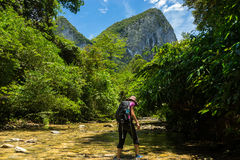 Woman trekking through jungle stream in Borneo, famous Mulu National Park. Stock Images