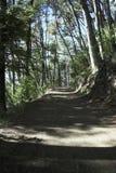 Trekking in het bos Stock Afbeeldingen