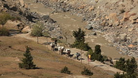 Trekking Himalayas Nepal. Transportation of goods on mules in the Himalayas stock video footage