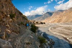 Trekking in the Himalayas Royalty Free Stock Images