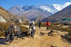 Trekking i Nepal Royaltyfri Fotografi