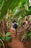 Trekking in jungle, Seychelles, Valle de Mai. A tropical rainforest. Tourist walking on a path in the jungle Valle de Mai royalty free stock photo
