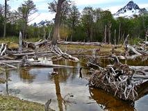 Trekking in Laguna Esmeralda lizenzfreie stockbilder