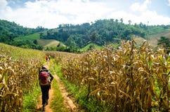 Trekking nel più forrest Fotografie Stock Libere da Diritti