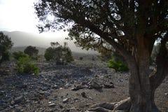 Trekking nell'Oman Fotografia Stock