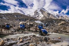Trekking Pakistans Karakoram K2 lizenzfreie stockfotos
