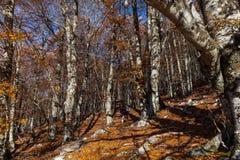 Trekking Parco Nazionale D'Abruzzo Arkivbilder