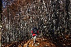 Trekking Parco Nazionale D'Abruzzo Royaltyfri Fotografi