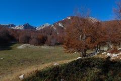 Trekking Parco Nazionale D'Abruzzo Royaltyfria Foton